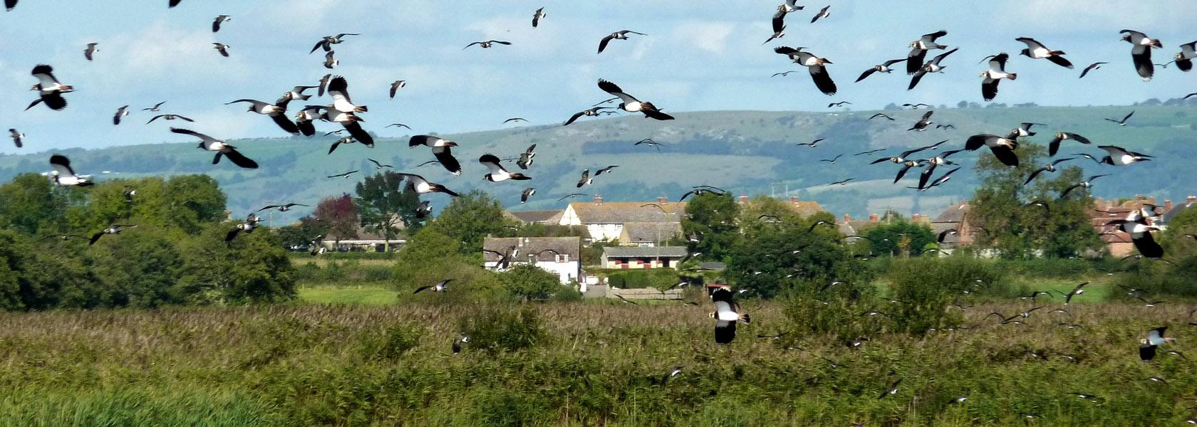 Birdwatching2_1680px